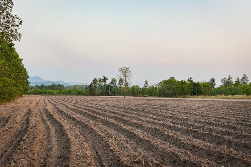 La charrue d'agriculture préparent le sol pour commencent à planter des terres cultivables de gisement de manioc photos libres de droits