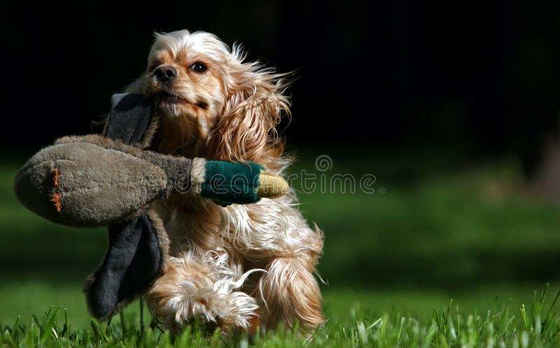 La chasse photo stock