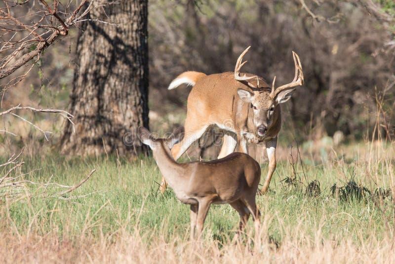 La chasse est allumée photographie stock
