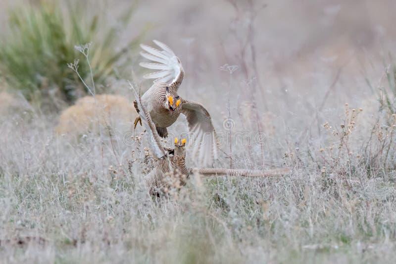 La chasse est allumée images stock
