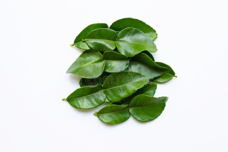 La chaux de kaffir de bergamote laisse herbe l'ingr?dient frais d'isolement sur le fond blanc image stock