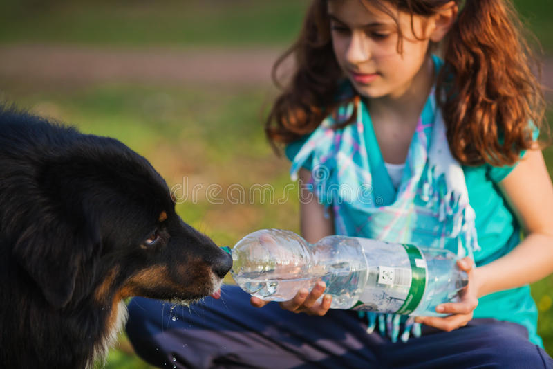 La chica joven da un perro a la bebida imagen de archivo libre de regalías