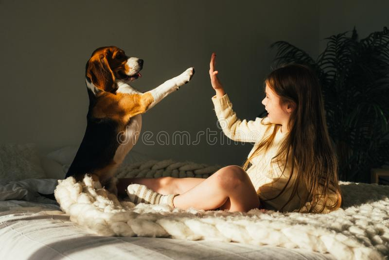 La chica joven encantadora que miente en el sofá, mirando el perro del beagle y da el alto cinco Niño lindo sonriente que descans fotografía de archivo