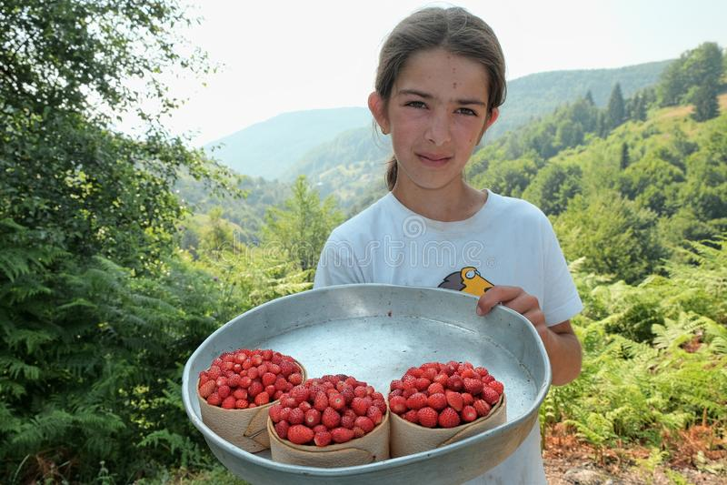 La chica joven me muestra alguna cesta por completo de fresas salvajes, de fruta local de la montaña de Tresnjevik entre Andrijev fotos de archivo