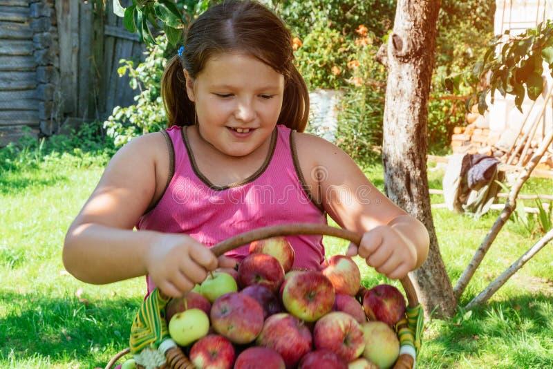 La chica joven sonriente recoge las manzanas de cesta imágenes de archivo libres de regalías