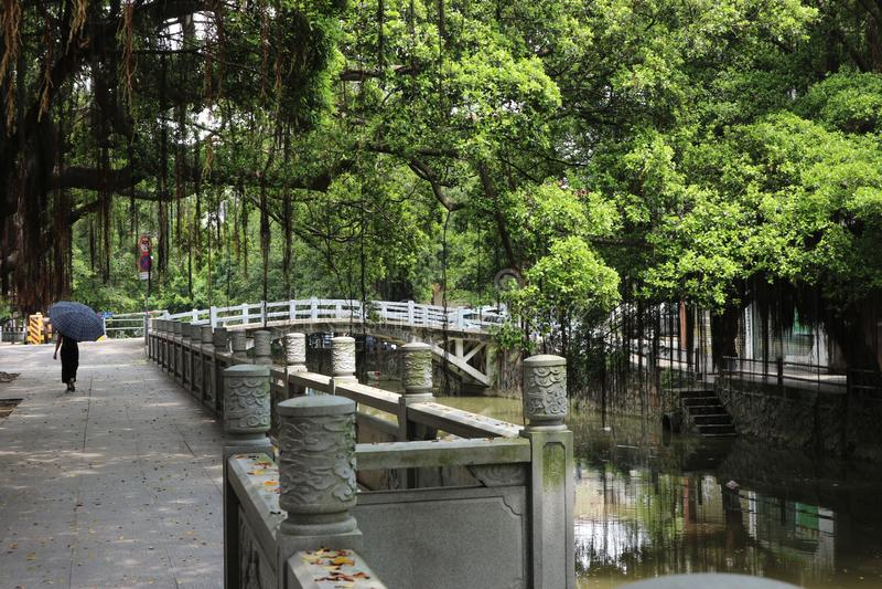 La Chine : il ` s une jungle photographie stock