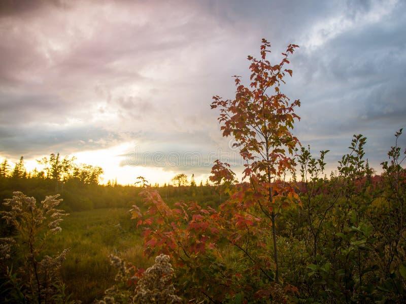 La chute colore l'île de prince Edward images stock