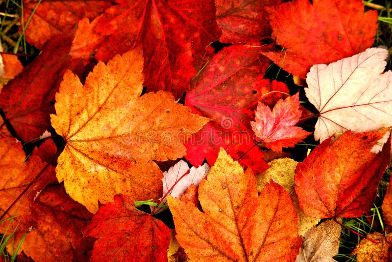 La chute pousse des feuilles des couleurs ! photos libres de droits