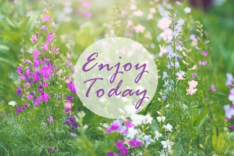 La citazione ispiratrice di motivazione gode di oggi su fondo dei fiori selvaggi di campanula immagini stock