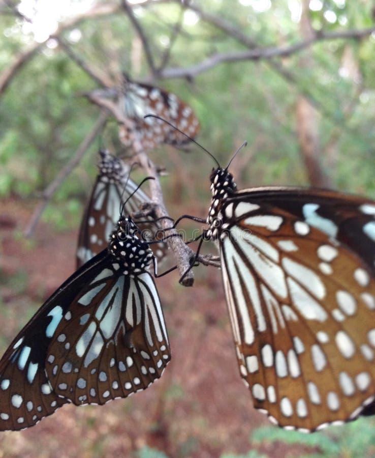 La ciudad de la mariposa imagenes de archivo