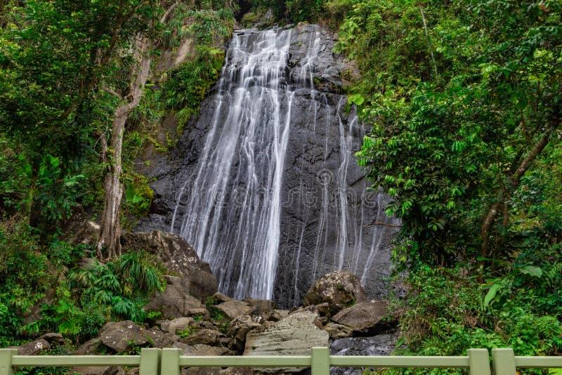 La Coca Waterfall i skog för El Yunque royaltyfria bilder