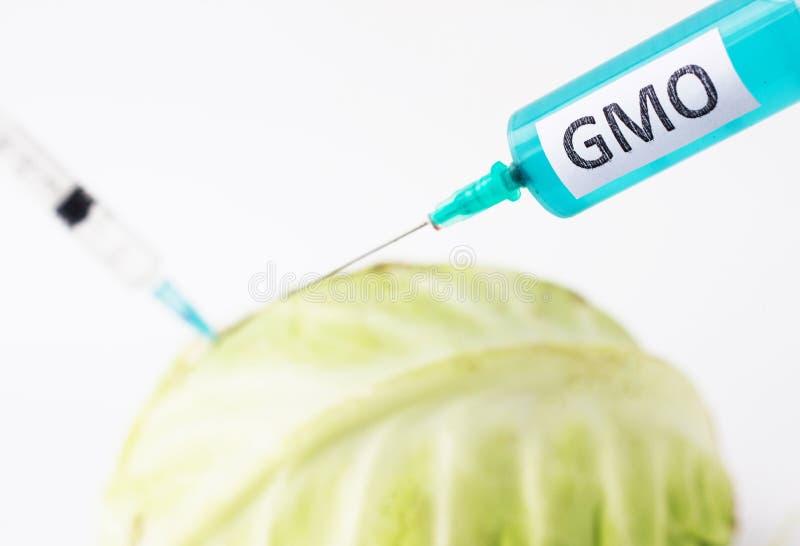 La col en un fondo blanco en el cual gmo y nitrata se inyecta de la jeringuilla, primer, organismo genético modificado fotografía de archivo libre de regalías