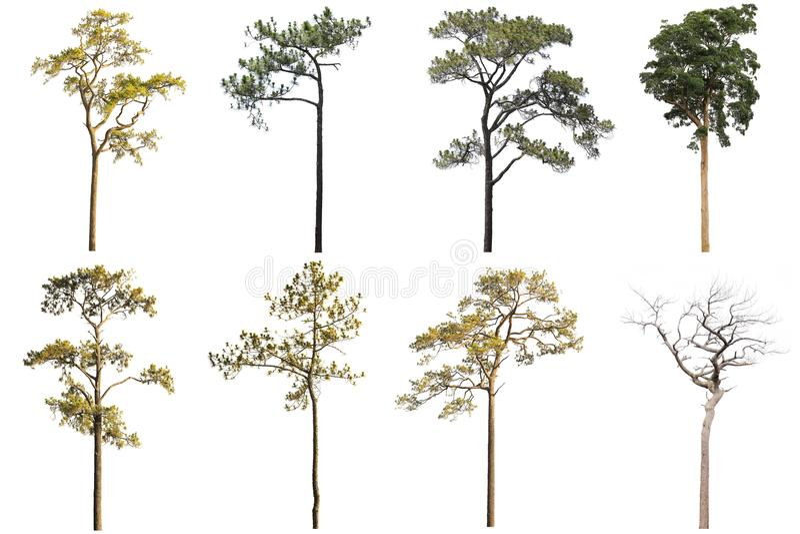 La colección de árboles aislados en el fondo blanco, beautif de A imagen de archivo