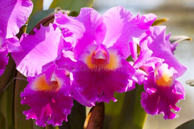 La colección de flor de la orquídea en la tierra de la parte posterior del verde, cierre encima de la orquídea florece fotografía de archivo