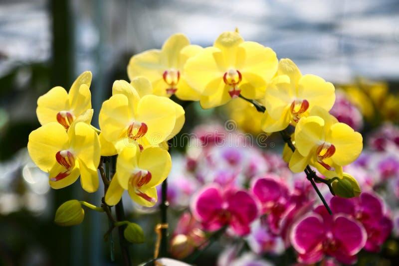 La colección de flor de la orquídea en la tierra de la parte posterior del verde, cierre encima de la orquídea florece fotos de archivo