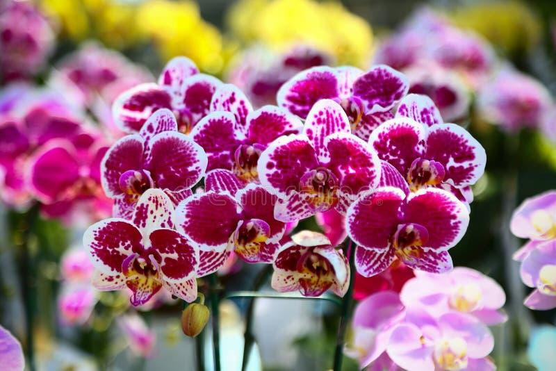 La colección de flor de la orquídea en la tierra de la parte posterior del verde, cierre encima de la orquídea florece fotografía de archivo libre de regalías