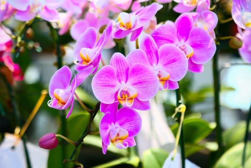 La colección de flor de la orquídea en la tierra de la parte posterior del verde, cierre encima de la orquídea florece fotos de archivo libres de regalías