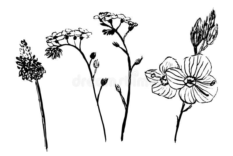 La colección del dibujo de flores de la margarita fijó el ejemplo del bosquejo ilustración del vector