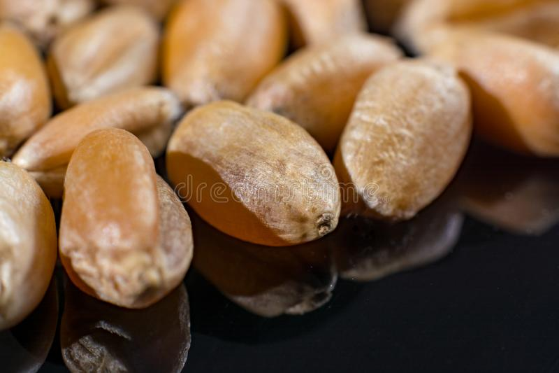 La colección macra, las semillas blancas secas del trigo se cierra para arriba en negro fotos de archivo