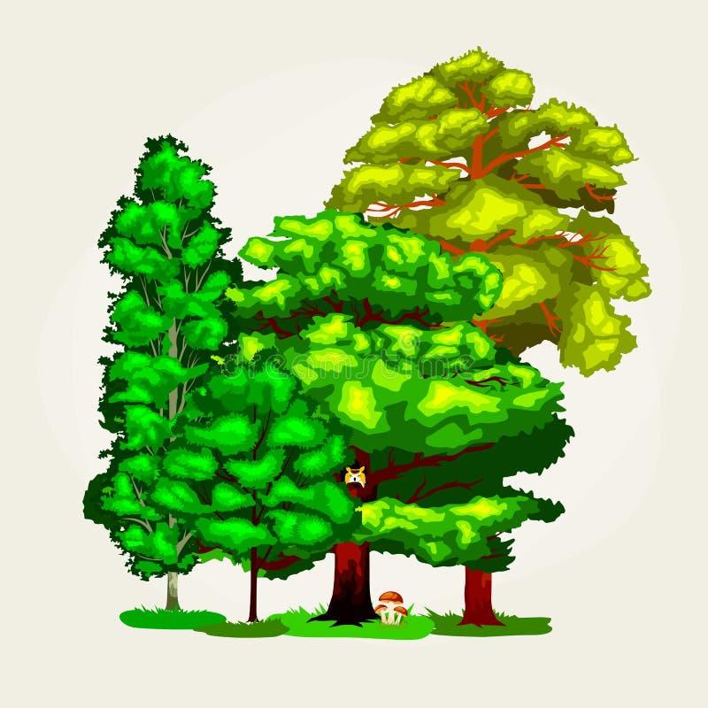 La colección verde de los árboles del verano del bosque en naturaleza, el pino con follaje de la rama y las hojas vector el ejemp libre illustration