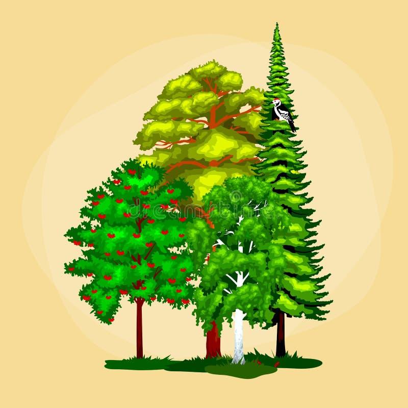 La colección verde de los árboles del verano del bosque en naturaleza, pino con follaje de la rama y hojas aisló el ejemplo del v stock de ilustración