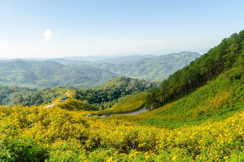 La colina del girasol mexicano con Mountain View fotografía de archivo