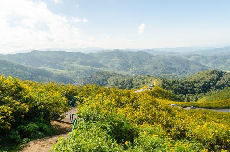 La colina del girasol mexicano con Mountain View imágenes de archivo libres de regalías