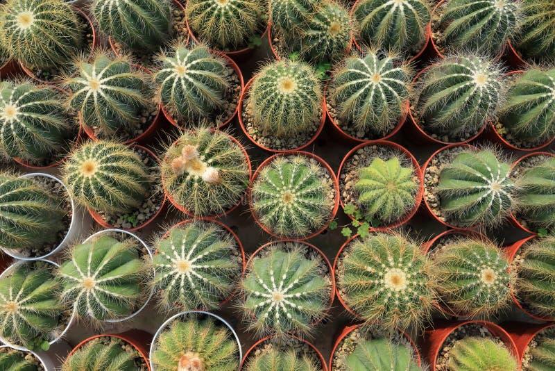 La collection d'affichage d'usines miniatures ?pineuses de cactus sur de petits pots bruns dans la conception minimale de style ? photo stock