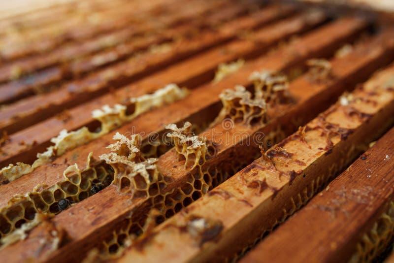 La colmena abierta con las abejas se está arrastrando a lo largo de la colmena en marco de madera del panal Concepto de la apicul fotos de archivo libres de regalías
