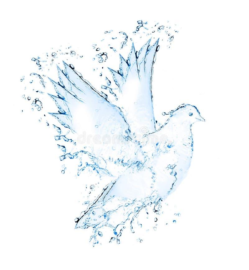 La colomba fatta dall'acqua spruzza fotografia stock libera da diritti