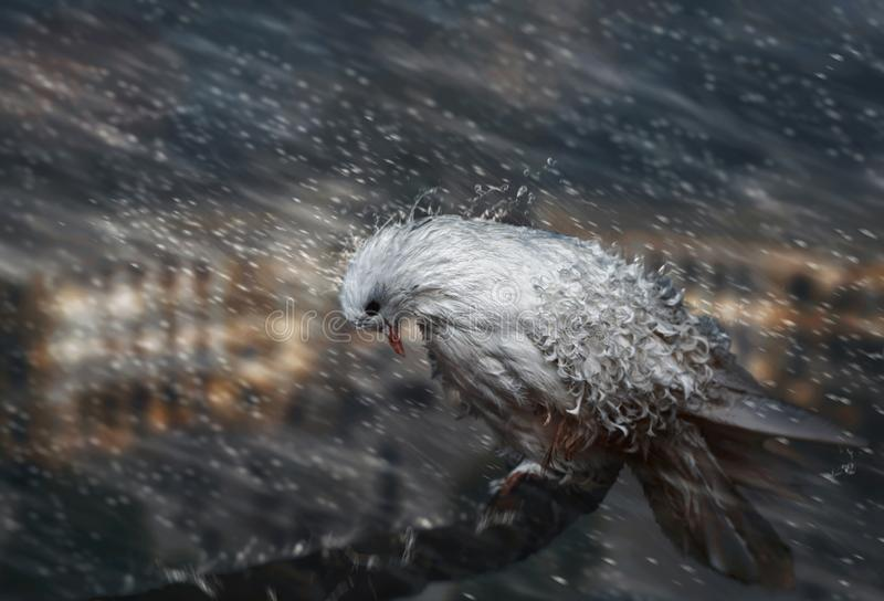 La colombe sous la pluie images stock