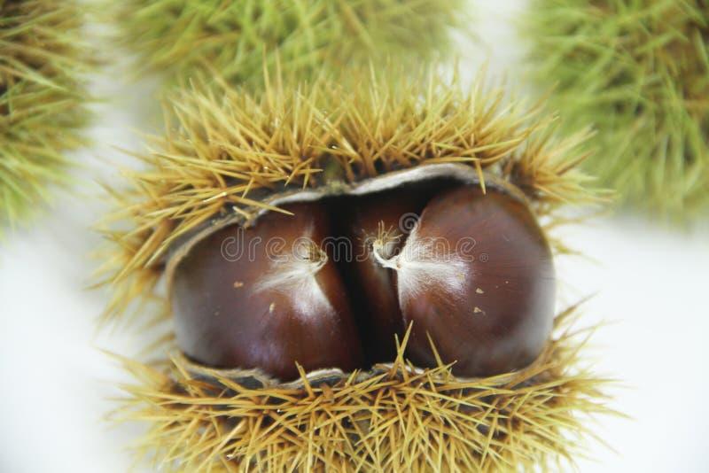 La comida de la castaña-Portuguesa aisló el sao saludable delicioso Paulo Brazil de la fruta blanca del fondo fotos de archivo libres de regalías