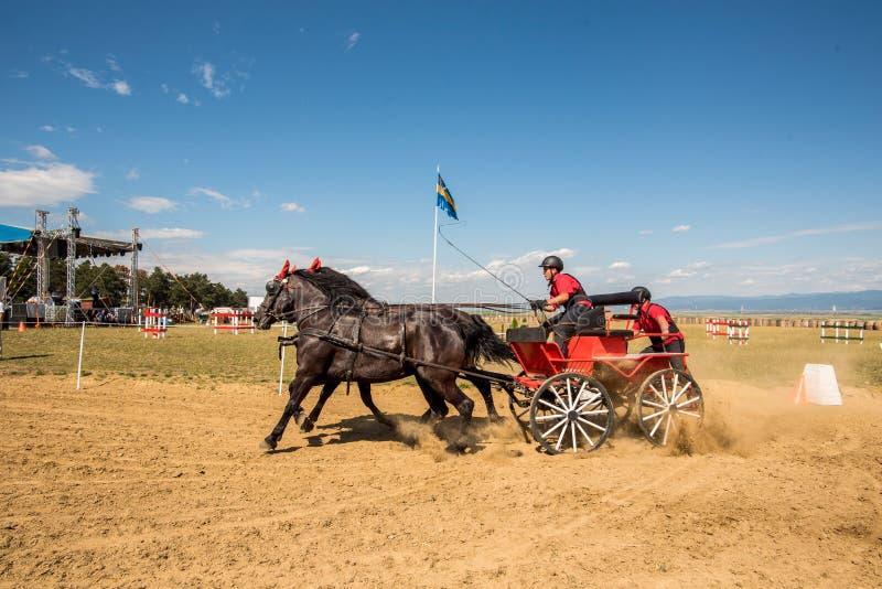 La competencia marrón de dos caballos con final del carro y del jinete da vuelta foto de archivo libre de regalías