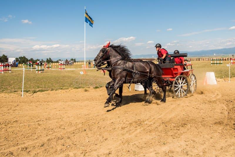 La competencia marrón de dos caballos con final del carro y del jinete da vuelta imagen de archivo libre de regalías