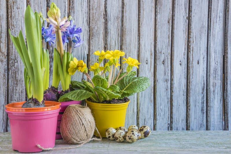 La composición del día de fiesta de Pascua con los huevos de codornices, diversa primavera florece fotografía de archivo libre de regalías