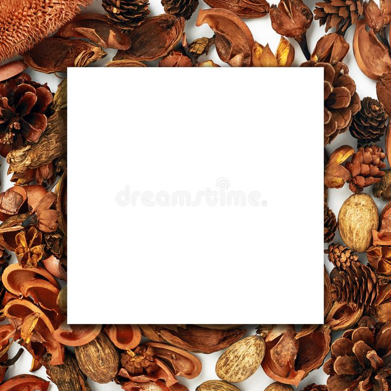 La composición del otoño, collage, Libro Blanco, madera, secó las flores y los brotes en un fondo blanco Concepto del otoño, espa imagenes de archivo