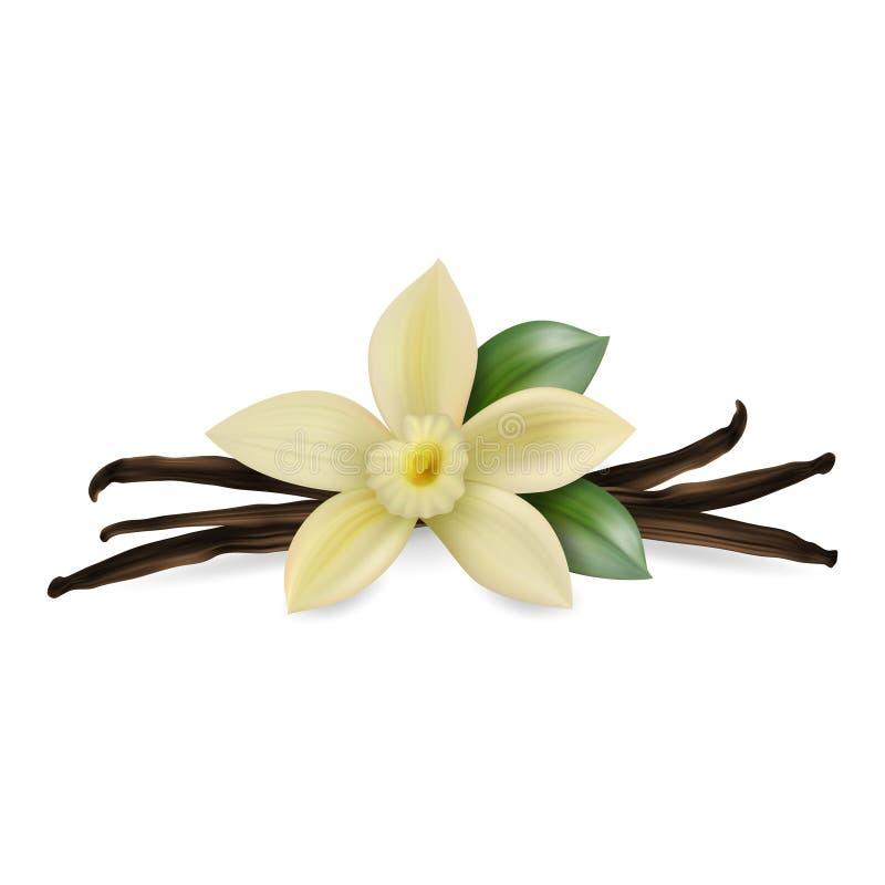 La composición realista del vector 3d con la flor fresca perfumada de la vainilla con las vainas y las hojas secadas de la semill libre illustration