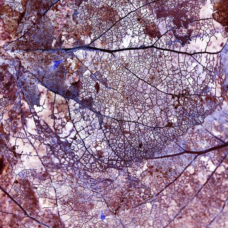 La composition abstraite avec les feuilles putréfiées avec des fibres donnent une consistance rugueuse et ont inversé à des coule images stock