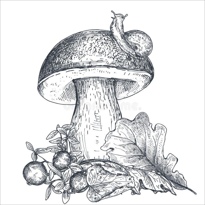 La composition de vecteur du champignon tiré par la main de forêt avec la chute part, escargot, canneberge illustration libre de droits