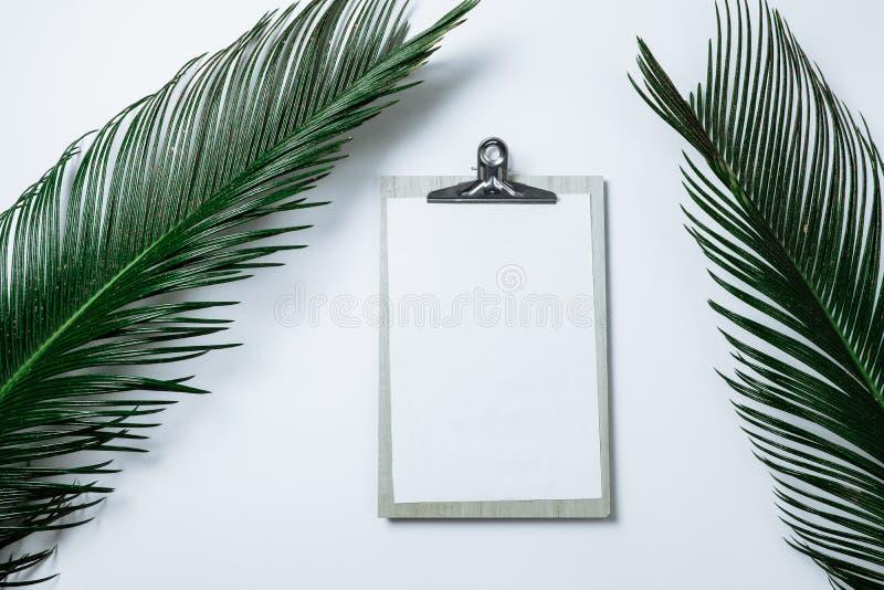 La composition minimale avec le presse-papiers et la paume verte partent sur le blanc photos stock