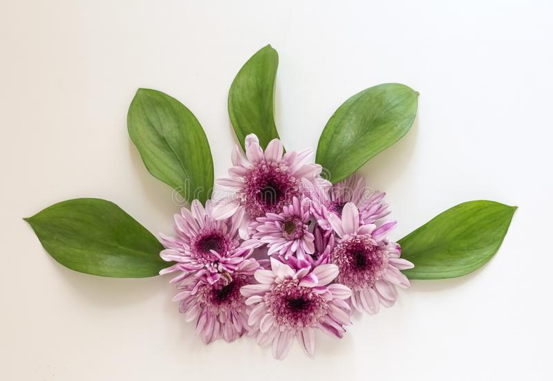 La composizione dei crisantemi su un fondo bianco Pasqua, molla, concetto di estate Posizione piana, vista superiore immagine stock libera da diritti