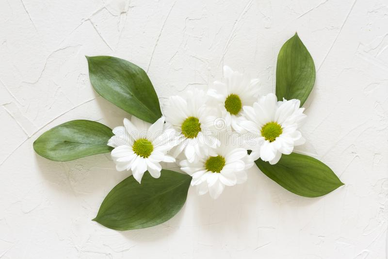 La composizione dei fiori del crisantemo su un fondo bianco piano si situa fotografie stock