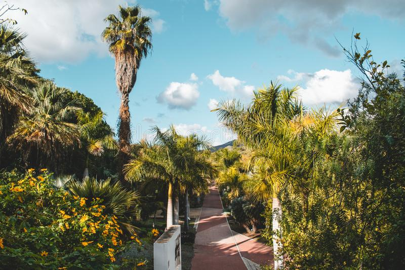 La Concepción Historical-Botanical Gardens just outside Malaga, Spain. Various trees and plants from all over the world stock images