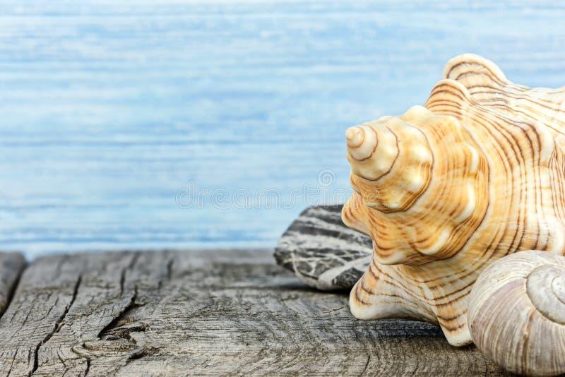 La concha marina en gris resistió a los tableros de madera contra fondo azul fotografía de archivo libre de regalías