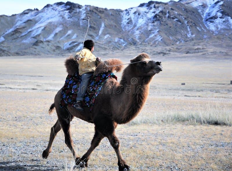 La concurrence de course de chameau pendant Eagle Festival d'or s'est tenue pendant l'hiver dans Ulgi Mongolie photos stock