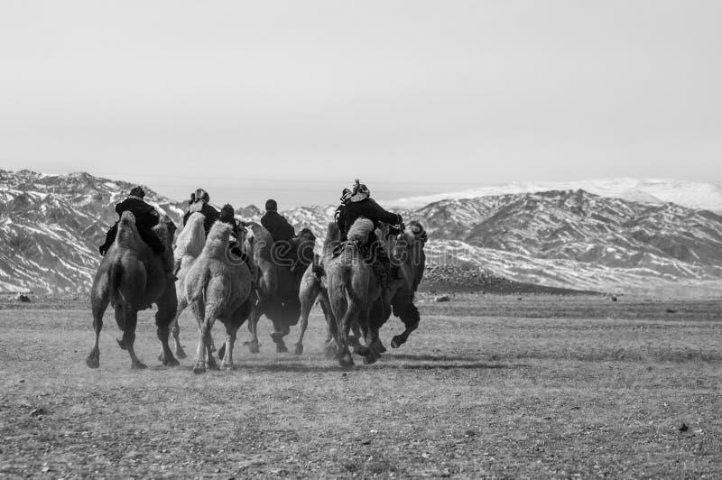 La concurrence de course de chameau pendant Eagle Festival d'or s'est tenue pendant l'hiver dans Ulgi Mongolie image stock