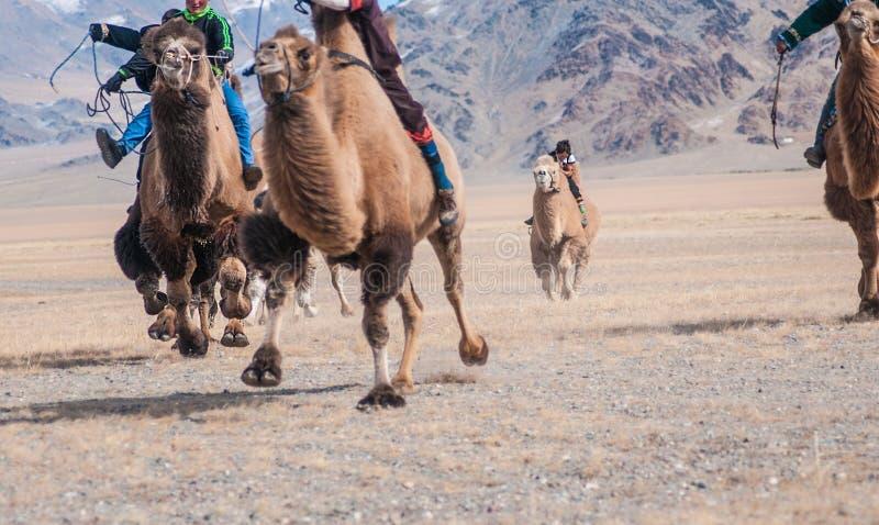 La concurrence de course de chameau pendant Eagle Festival d'or s'est tenue pendant l'hiver dans Ulgi Mongolie photographie stock