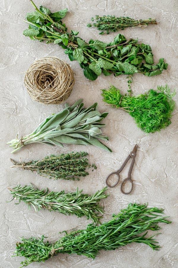 La configuration plate avec les herbes et la verdure fraîches pour sécher et faire des épices a placé sur le fond en pierre de cu photos stock