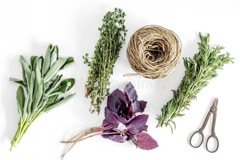 La configuration plate avec les herbes et la verdure fraîches pour sécher et faire des épices a placé sur le modèle blanc de fond image stock