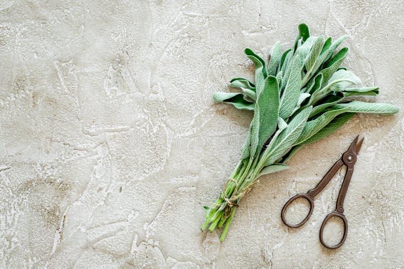 La configuration plate avec les herbes et la verdure fraîches pour sécher et faire des épices a placé sur la maquette en pierre d photo libre de droits